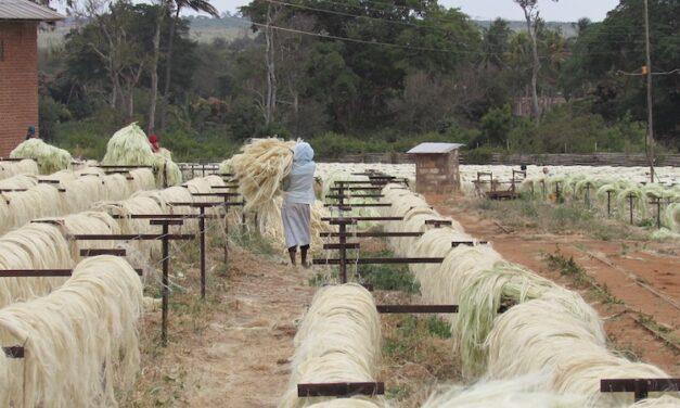 Tanzania, uno sguardo esperto, limpido e sincero